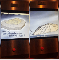 Target, Tumblr, and Blog: Here's a  step-by-step guide  to becoming a fossil  STEP ONE: DIE. wonderytho:meirl
