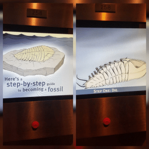Dank, Memes, and Target: Here's a  step-by-step guide  to becoming a fossil  STEP ONE: DIE. meirl by Laggiter97 MORE MEMES