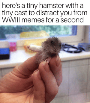 good for morale: here's a tiny hamster with a  tiny cast to distract you from  WWIII memes for a second good for morale