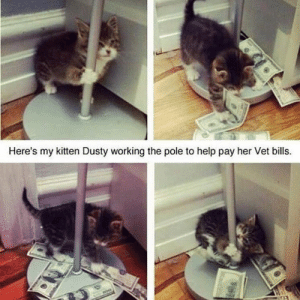 Welcome to the real world, kitty: Here's my kitten Dusty working the pole to help pay her Vet bills. Welcome to the real world, kitty