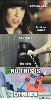 Here's my number  So call me,  maybe?  Hello Maybe  This is Dog  ORD  NO THIS  IS  HE  PATRICK