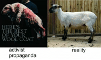 So horrific...  -AP: HERE'S  THE REST  OF YOUR  WOOL COAT  activist  propaganda  reality So horrific...  -AP