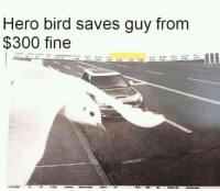 Memes, Heroes, and 🤖: Hero bird saves guy from  $300 fine Not all heroes need capes. Some can fly.