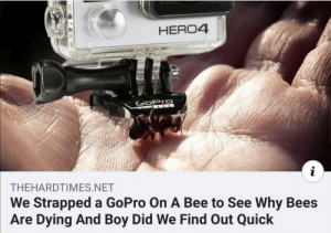 srsfunny:  Oh boy we found out the reason quickly: HERO4  GoPro  THEHARDTIMES.NET  We Strapped a GoPro On A Bee to See Why Bees  Are Dying And Boy Did We Find Out Quick srsfunny:  Oh boy we found out the reason quickly