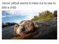 Pitbull, Peace, and Bite: Heroic pitbull swims 5 miles out to sea to  bite a child <p>BREED OF PEACE</p>