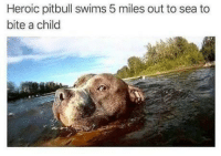 Heroic: Heroic pitbull swims 5 miles out to sea to  bite a child