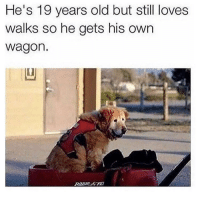 Memes, Animal, and Best: He's 19 years old but still loves  walks so he gets his own  wagon. @teamnobadtimes provides the best animal memes 😩😊💕🙋🏽‍♀️