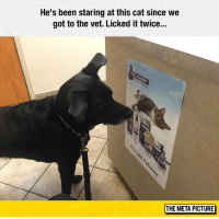 Tumblr, Blog, and Http: He's been staring at this cat since we  got to the vet. Licked it twice...  THE META PICTURE lolzandtrollz:The Shnoz Berries Taste Like Shnoz Berries