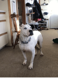 Good, Boy, and Still: He's blind and deaf but still a very good boy!