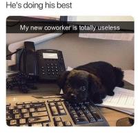 Best, New, and Hes: He's doing his best  My new coworker is totally useless Hes doing his best!