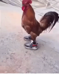 Shoes, Sneakers, and Chicken: He's got his running shoes on