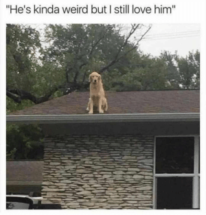 """Animals, Dogs, and Love: """"He's kinda weird but I still love him"""" Dog Memes Of The Day 30 Pics – Ep53 #animalmemes #dogmemes #memes #dogs - Lovely Animals World"""