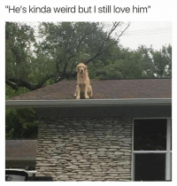 """What's he doing up there 😂 (Cred @hucktheroofdog ): """"He's kinda weird but I still love him"""" What's he doing up there 😂 (Cred @hucktheroofdog )"""