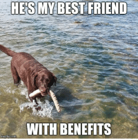 Best Friend, Dildo, and Best: HES MY BEST FRIEND  WITH BENEFITS  imgtiip.com <p>Double Dildo Dog</p>