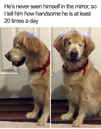 <p>A blind dog is still beautiful</p>: He's never seen himself in the mirror, so  l tell him how handsome he is at least  20 times a day <p>A blind dog is still beautiful</p>