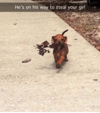 Wow good boy @cuteassanimals_ @cuteassanimals_ @cuteassanimals_: He's on his way to steal your girl Wow good boy @cuteassanimals_ @cuteassanimals_ @cuteassanimals_