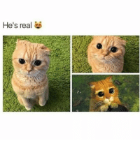 kitty is so cute i love him ~cjw 🎁 🎄 🎁 🎄 🎁 🎄 { textpost textposts tumblr text tumblrpost tumblrposts same funnytumblr relatable funnytextpost funnytextposts tumblrquote tumblrquotes meme memes pun puns popular lol 😂 funny makeup puppies }: He's real kitty is so cute i love him ~cjw 🎁 🎄 🎁 🎄 🎁 🎄 { textpost textposts tumblr text tumblrpost tumblrposts same funnytumblr relatable funnytextpost funnytextposts tumblrquote tumblrquotes meme memes pun puns popular lol 😂 funny makeup puppies }