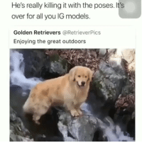 Instagram, Memes, and Best: He's  really  killing  it  with  the  poses.  It's  over for all you lG models.  Golden Retrievers @RetrieverPics  Enjoying the great outdoors The best Instagram model we've ever seen. . . . (📹: @pupinsoffl) dogsofig adoptdontshop doggo dogoftheday woofwednesday woof model igmodel instafluff memesdaily dogmemes