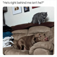 "Funny, Animal, and Pictures: ""He's right behind me isn't he?"" 24 Funny Animal Pictures #Funny #Picture"