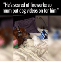 """scared: """"He's scared of fireworks so  mum put dog videos on for him  13"""
