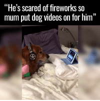 """Dank, Dogs, and Scare: """"He's scared of fireworks so  mum put dog videos on for him  11 I can't deal with this 😂😂🙌"""