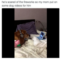 Videos, Fireworks, and Mom: he's scared of the fireworks so my mom put on  some dog videos for him