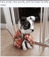 Cape, Hes, and Scruffy: He's small, he's scruffy, and he loves his little  cape