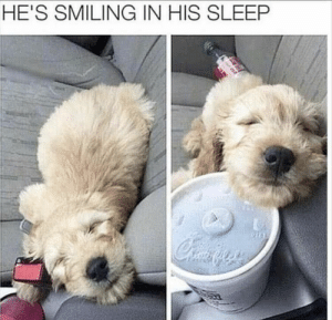 Funny Animal Pictures Of The Day – 35 Pics Ep15 - Lovely Animals World: HE'S SMILING IN HIS SLEEP Funny Animal Pictures Of The Day – 35 Pics Ep15 - Lovely Animals World