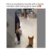 thatswhatsup: He's so excited to reunite with a family  member after being gone aww thatswhatsup