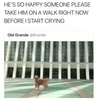 Crying, Memes, and Good: HE'S SO HAPPY SOMEONE PLEASE  TAKE HIM ON A WALK RIGHT NOW  BEFORE I START CRYING  Old Grande @6rande That's a very happy good boy | @cuteandfuzzybunch