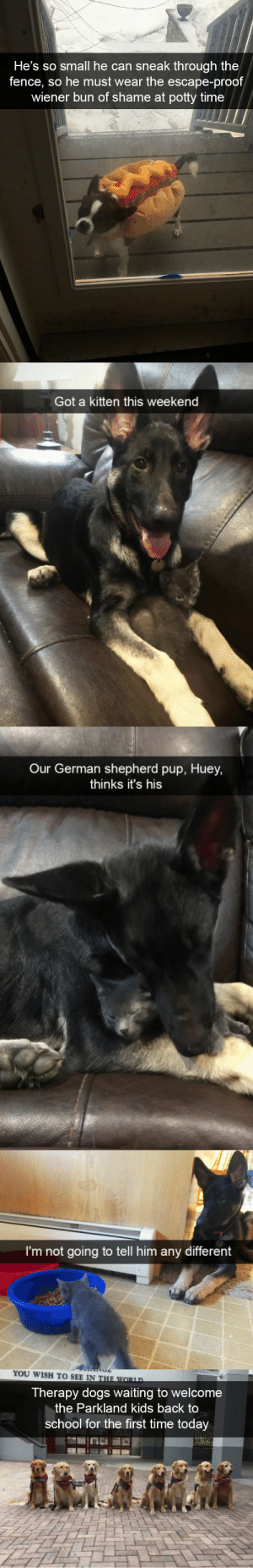 babyanimalgifs:  Dog snapsvia @animalsnaps: He's so small he can sneak through the  fence, so he must wear the escape-proof  wiener bun of shame at potty time   Got a kitten this weekend  Our German shepherd pup, Huey,  thinks it's his  I'm not going to tell him any different   YOU WISH TO SEE IN  Therapy dogs waiting to welcome  the Parkland kids back to  school for the first time today babyanimalgifs:  Dog snapsvia @animalsnaps