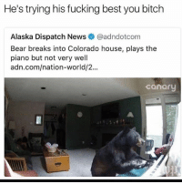 Bitch, Fucking, and Funny: He's trying his fucking best you bitch  Alaska Dispatch News @adndotcom  Bear breaks into Colorado house, plays the  piano but not very well  adn.com/nation-world/2..  canary Stevie wonder thinks he's slick @no_chillbruh