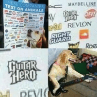 Animals, Science, and Dank Memes: HESE COM  EST ON ANIMALS  MAYBELLINE  eSo REVLON  RIGHT  GUARD Science has gone too far