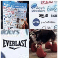 Animals, Avon, and Diesel: HESE COMPANIES  EST ON ANIMALS  ebr  ACUVUE Aveeno  AXE AVON  PURINA  ALMAY  BOSS M OAR'.::: t me  c佃orm @  Colgate aChap Stick  EVERLAST LISTE  Crest DIESEL  DAUISTER LOREAL  REVMON PANTNE  NIVEA  Rosaine  REDKEN  ders  EVERLAST