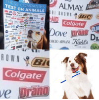 "<p>Animal Testing memes on the rise INVEST! via /r/MemeEconomy <a href=""http://ift.tt/2tpVLUt"">http://ift.tt/2tpVLUt</a></p>: HESE COMPANIES  ON ANIMALS  ALMAY  TEST  ARMO  PURINA ALMAY  ACUVUE Aveeno  AXE AVON  WICK  Chap Stick COVERGIRI  prany Crest DIESEL  D&G Elizabeth Anken EALEDER  Colgate  GLAD  heads  shoubers  Dial Gillette  LISTERINE LOREAL  CLO  MAYBELLINE Old Spice  PineS REVION PANTENE  Pampers  ORGIO ARMANI erl  RUM İNEN  ot S ves REDKEN  Colgate  ve  prano <p>Animal Testing memes on the rise INVEST! via /r/MemeEconomy <a href=""http://ift.tt/2tpVLUt"">http://ift.tt/2tpVLUt</a></p>"