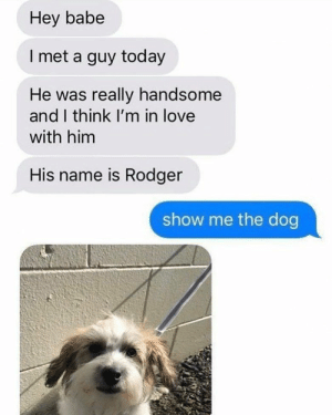 Animals, Bad, and Bad Day: Hey babe  I met a guy today  He was really handsome  and I think I'm in love  with him  His name is Rodger  show me the dog 30 Funny Dog Memes That Will Cure Your Bad Day - Lovely Animals World