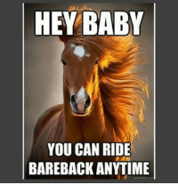 hey baby: HEY BABY  YOU CAN RIDE  BAREBACK ANYTIME