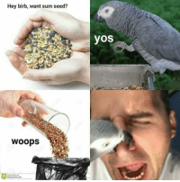"""<p>Don&rsquo;t mess with birb via /r/memes <a href=""""https://ift.tt/2J4wWDt"""">https://ift.tt/2J4wWDt</a></p>: Hey birb, want sum seed?  yos  woopS <p>Don&rsquo;t mess with birb via /r/memes <a href=""""https://ift.tt/2J4wWDt"""">https://ift.tt/2J4wWDt</a></p>"""