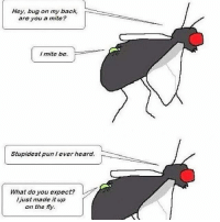 Memes, Back, and 🤖: Hey, bug on my back,  are you a mite?  I mite be.  Stupidest pun lever heard.  What do you expect?  just made it up  on the fly.