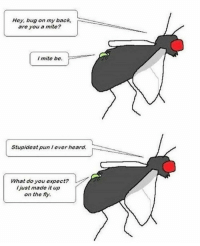 Ba dum Pssss: Hey, bug on my back,  are you a mite?  I mite be.  Stupidest pun lever heard.  What do you expect?  l just made it up  on the fy. Ba dum Pssss