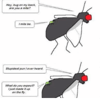 Memes, 🤖, and Bug: Hey, bug on my back,  are you a mite?  mite be.  ever heard.  Stupidest What do you expect?  /just made it up  on the fly. http://t.co/sbESrvwyil