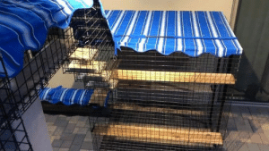 Crazy, Memes, and Blue: Hey Catbitat Fans!  We teased you about a month ago...letting you know, that our clients (famous for their cool, Blue DOUBLE Decker Tunnels, that we use in our ads...) were about to do something CRAZY!!  Well...checkout this view...from the Sky Deck!!