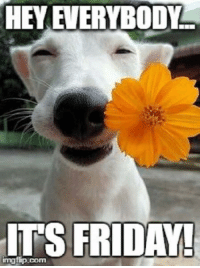 Almost quitting time!!!: HEY EVERYBODY  ITS FRIDAY!  imgffpucom Almost quitting time!!!