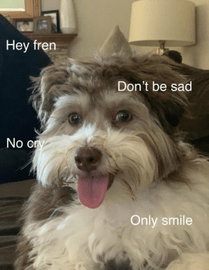 Memes, Smile, and Sad: Hey fren  Don't be sad  No cry  Only smile https://t.co/v8cuHKYXx1