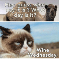 guess what day it is: Hey guess wha  day it is!? What  day is it?  Wine  Wednesday
