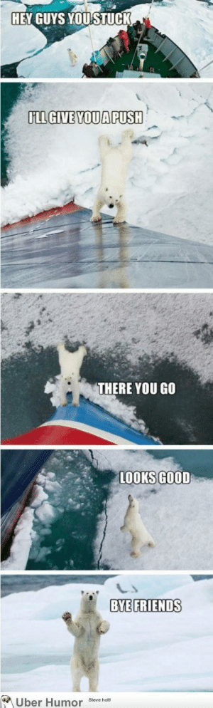 Friendly polar bearhttp://meme-rage.tumblr.com: HEY GUYS YOUSTUCK  FLL GIVE YOU APUSH  THERE YOU GO  LOOKS GOOD  BYE FRIENDS  A Uber Humor  Steve holt! Friendly polar bearhttp://meme-rage.tumblr.com