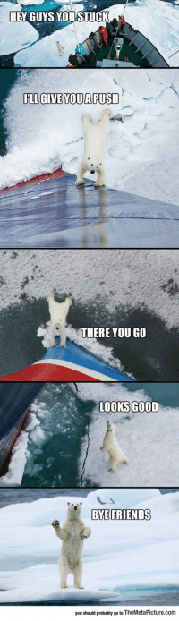 Friends, Tumblr, and Bear: HEY GUYS YOUSTUCK  IILL GIVE YOUA PUSH  THERE YOU GO  LOOKS GOOD  BYE FRIENDS  you shoud probaby go to TheMetaPicture.com srsfunny:  Friendly Polar Bear