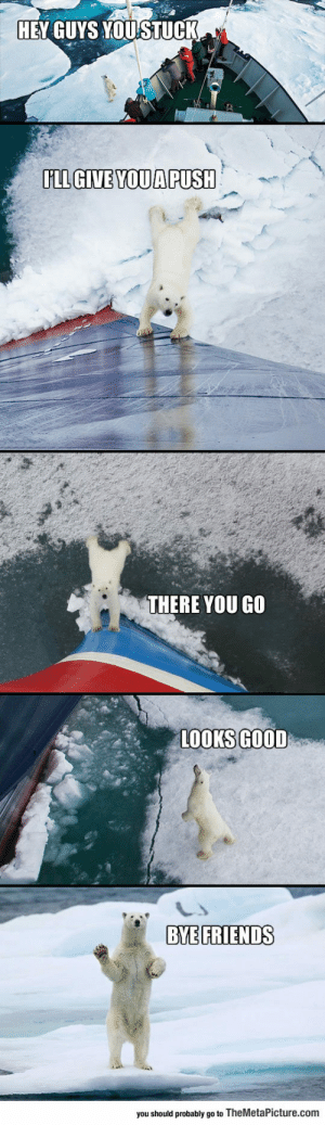 Friends, Tumblr, and Bear: HEY GUYS YOUSTUCK  IILL GIVE YOUA PUSH  THERE YOU GO  LOOKS GOOD  BYE FRIENDS  you shoud probaby go to TheMetaPicture.com srsfunny:Friendly Polar Bear