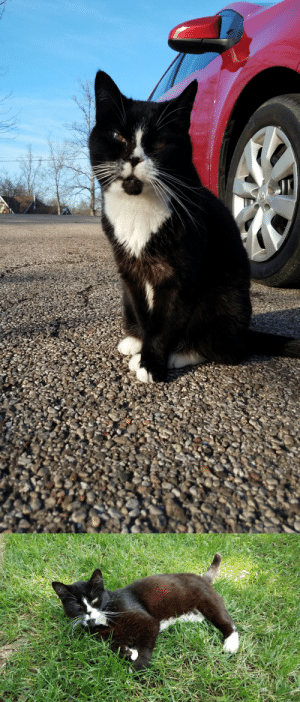 Hey guysThis is my cat,Sylvester. I have had him for roughly 15 years now. He is one of my best friends and is always there for me. Lately, I have been noticing there is something wrong with his eyes,and unfortunately, he will need surgery for them to be fixed. While I have been working hard all summer to try and get some money together,school will be starting back up for me in about a week,and it will just make it harder for me to save for his  veterinarian visits and surgery.I have set up a GoFundMe page for anyone who would like to help. I will appreciate every little bit that will help. Thank you and have a good day/night :)https://www.gofundme.com/f/uys87m-surgery-for-my-cat-sylvester: Hey guysThis is my cat,Sylvester. I have had him for roughly 15 years now. He is one of my best friends and is always there for me. Lately, I have been noticing there is something wrong with his eyes,and unfortunately, he will need surgery for them to be fixed. While I have been working hard all summer to try and get some money together,school will be starting back up for me in about a week,and it will just make it harder for me to save for his  veterinarian visits and surgery.I have set up a GoFundMe page for anyone who would like to help. I will appreciate every little bit that will help. Thank you and have a good day/night :)https://www.gofundme.com/f/uys87m-surgery-for-my-cat-sylvester