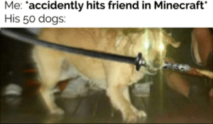 Hey hey pyrocincal look at this funny Minecraft meme about funny dog with big knife!: Hey hey pyrocincal look at this funny Minecraft meme about funny dog with big knife!